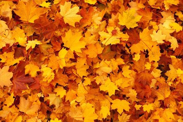 autumn-83761_960_720